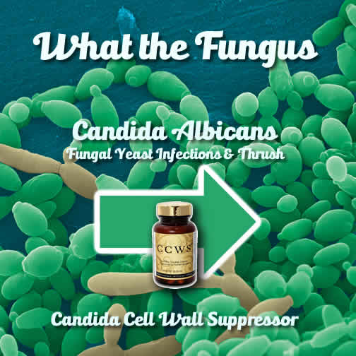 What Is Candida Albicans / Candidasis